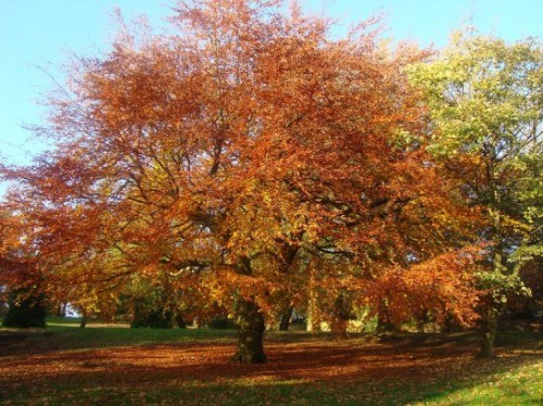 Manchester in autunno